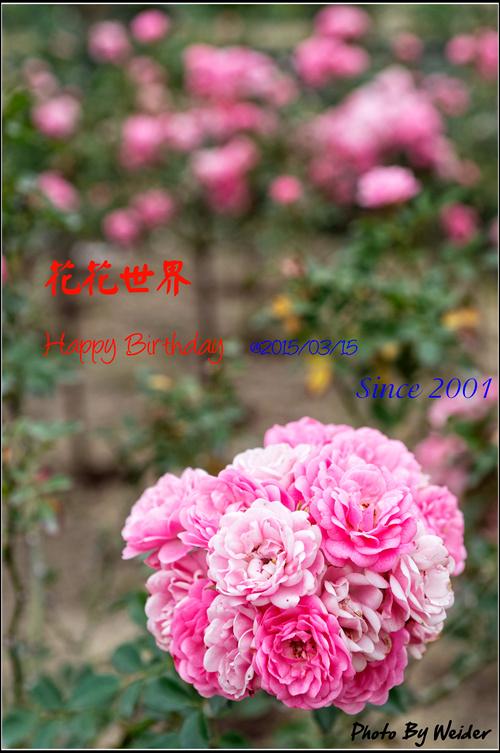 http://gnl.hunternet.com.tw/花花/pic/birthday/2015/花花2015生日.jpg
