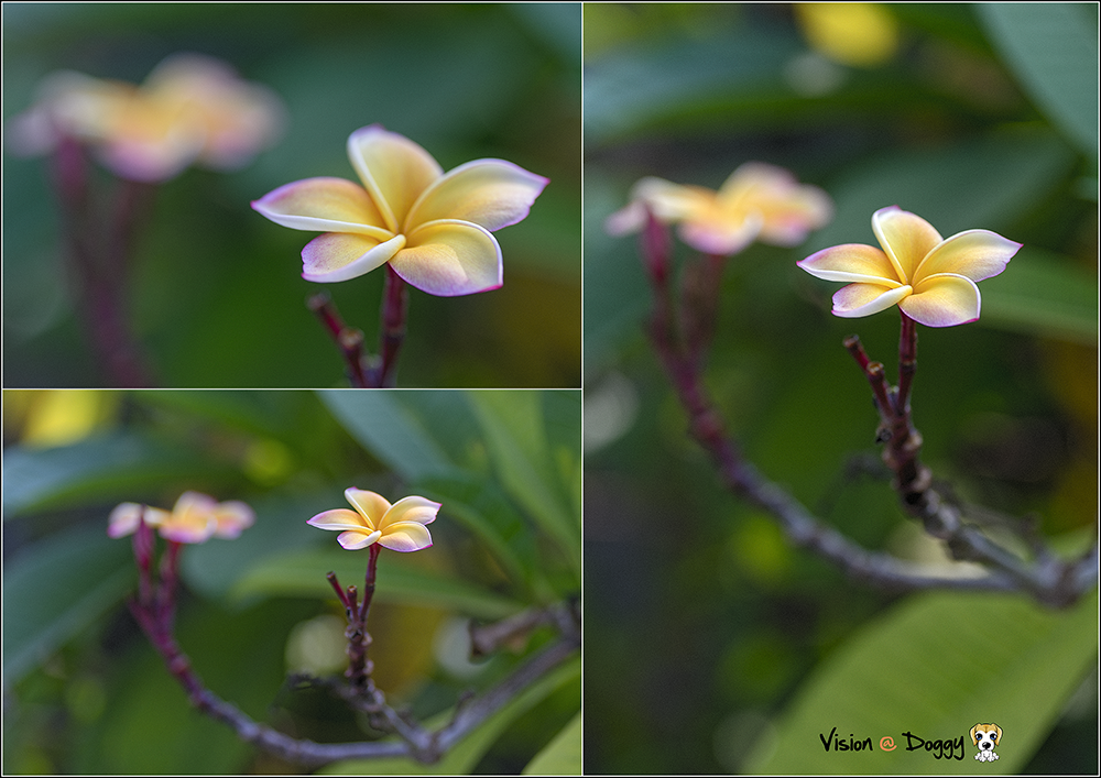 http://gnl.hunternet.com.tw/weider/web/wp-content/gallery/blue-lane/pic-20171025-01-03-frangipani.png