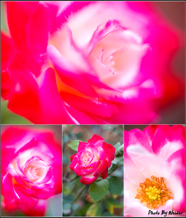 http://gnl.hunternet.com.tw/weider/web/wp-content/gallery/doggy-n-rose/jubiledu-prince-monaco-20160228-01-04_0.jpg