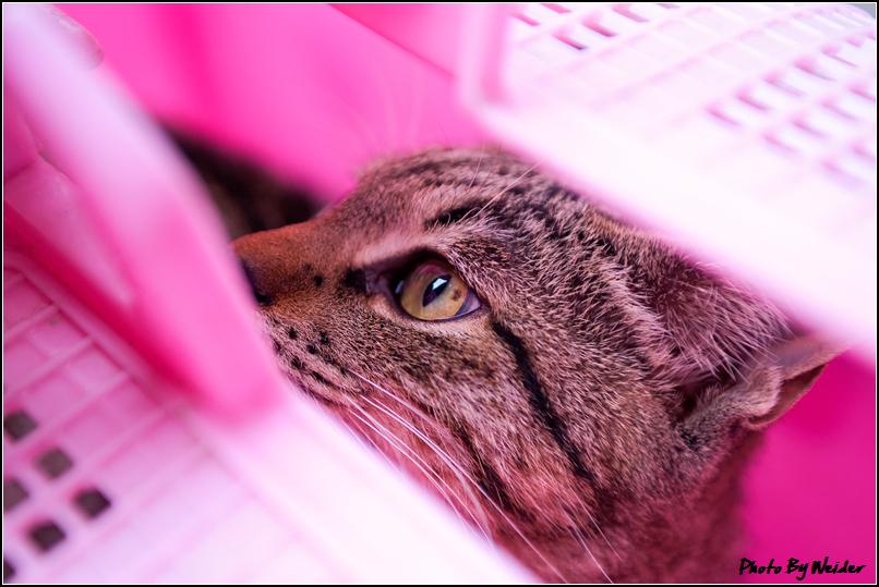 http://gnl.hunternet.com.tw/weider/web/wp-content/gallery/keliao/cat-20141203-01.jpg