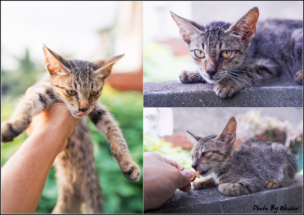 http://gnl.hunternet.com.tw/weider/web/wp-content/gallery/other/cat-20140806.jpg