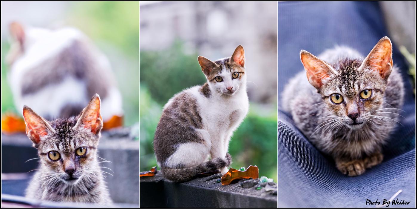 http://gnl.hunternet.com.tw/weider/web/wp-content/gallery/other/cat-20140813.jpg