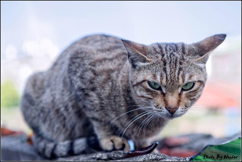 http://gnl.hunternet.com.tw/weider/web/wp-content/gallery/other/cat-20150226-01.jpg