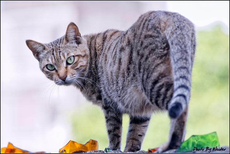 http://gnl.hunternet.com.tw/weider/web/wp-content/gallery/other/cat-20150226-05.jpg