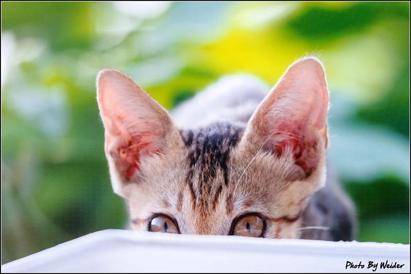 http://gnl.hunternet.com.tw/weider/web/wp-content/gallery/other/cat-20150618-02.jpg
