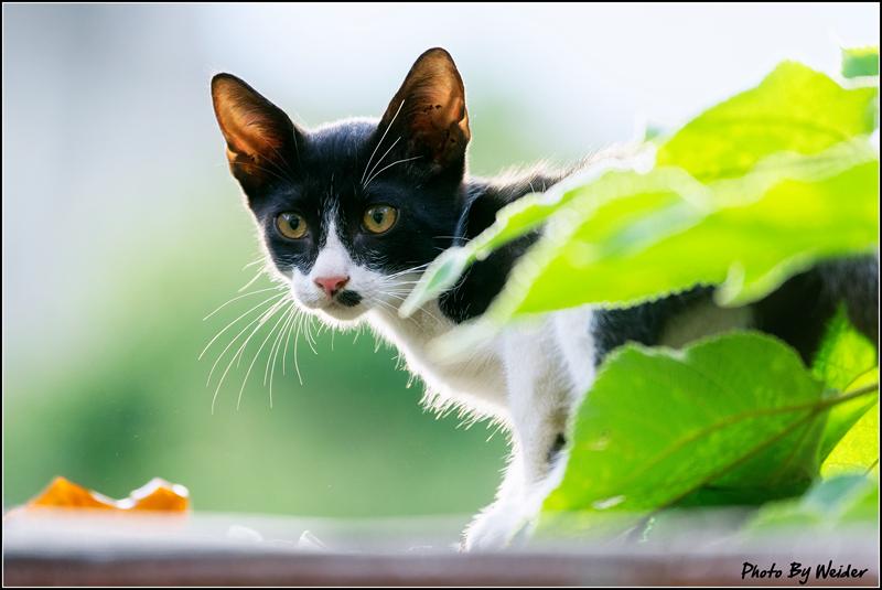 http://gnl.hunternet.com.tw/weider/web/wp-content/gallery/other/cat-20150618-04.jpg