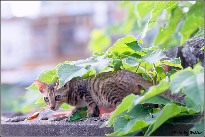 http://gnl.hunternet.com.tw/weider/web/wp-content/gallery/other/cat-20150619-04.jpg