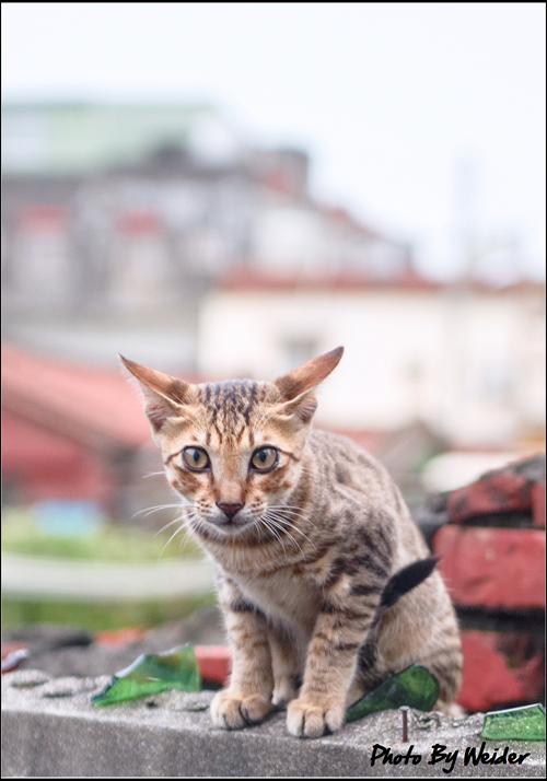 http://gnl.hunternet.com.tw/weider/web/wp-content/gallery/other/cat-20150809-01.jpg