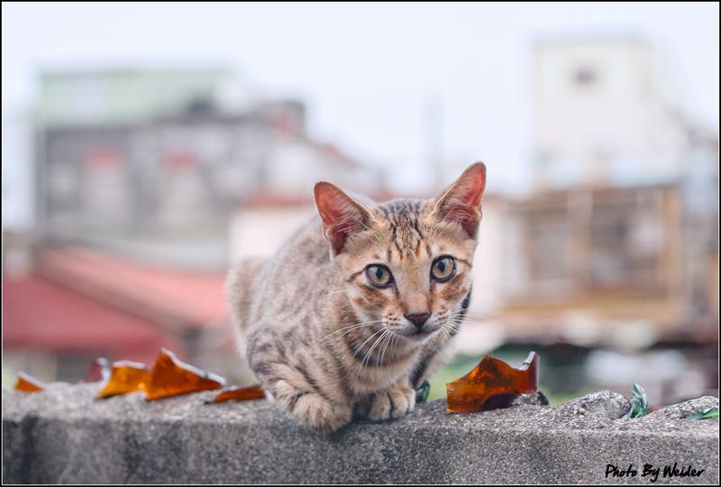 http://gnl.hunternet.com.tw/weider/web/wp-content/gallery/other/cat-20150809-03.jpg