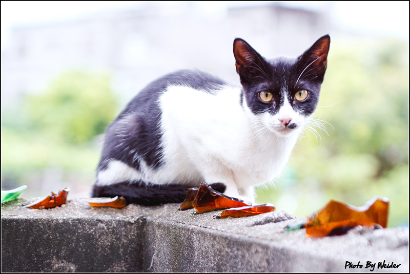 http://gnl.hunternet.com.tw/weider/web/wp-content/gallery/other/cat-20150829-05.jpg