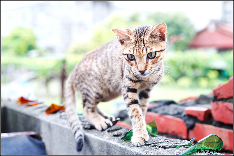 http://gnl.hunternet.com.tw/weider/web/wp-content/gallery/other/cat-20150829-06.jpg