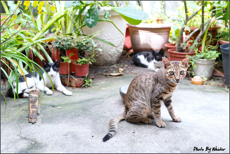 http://gnl.hunternet.com.tw/weider/web/wp-content/gallery/other/cat-20150909-01.jpg